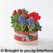 Scented Christmas Hatbox Planter