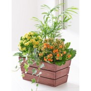 Kalanchoe & Palm Planter
